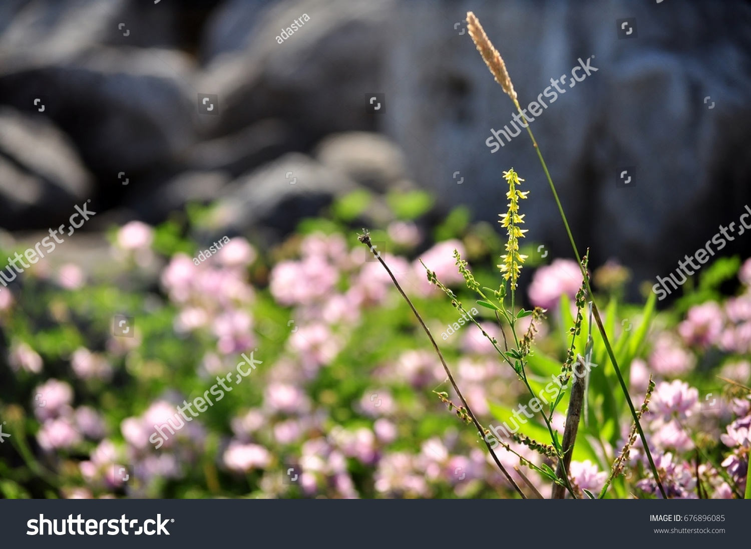 Yellow Small Fine Flower Grass On Stock Photo Edit Now 676896085