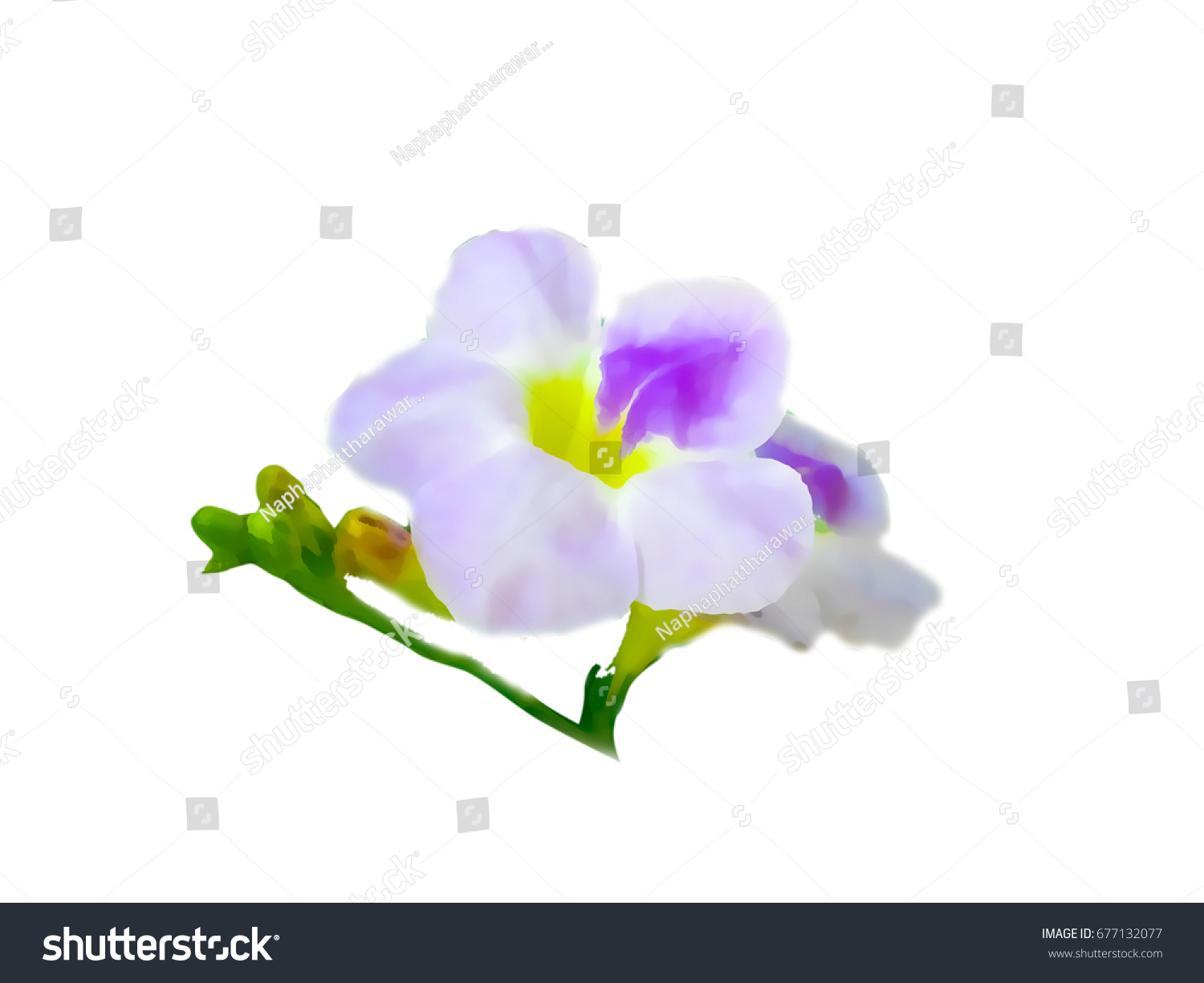 Purple Flowers Painting On White Background Stock Illustration ...