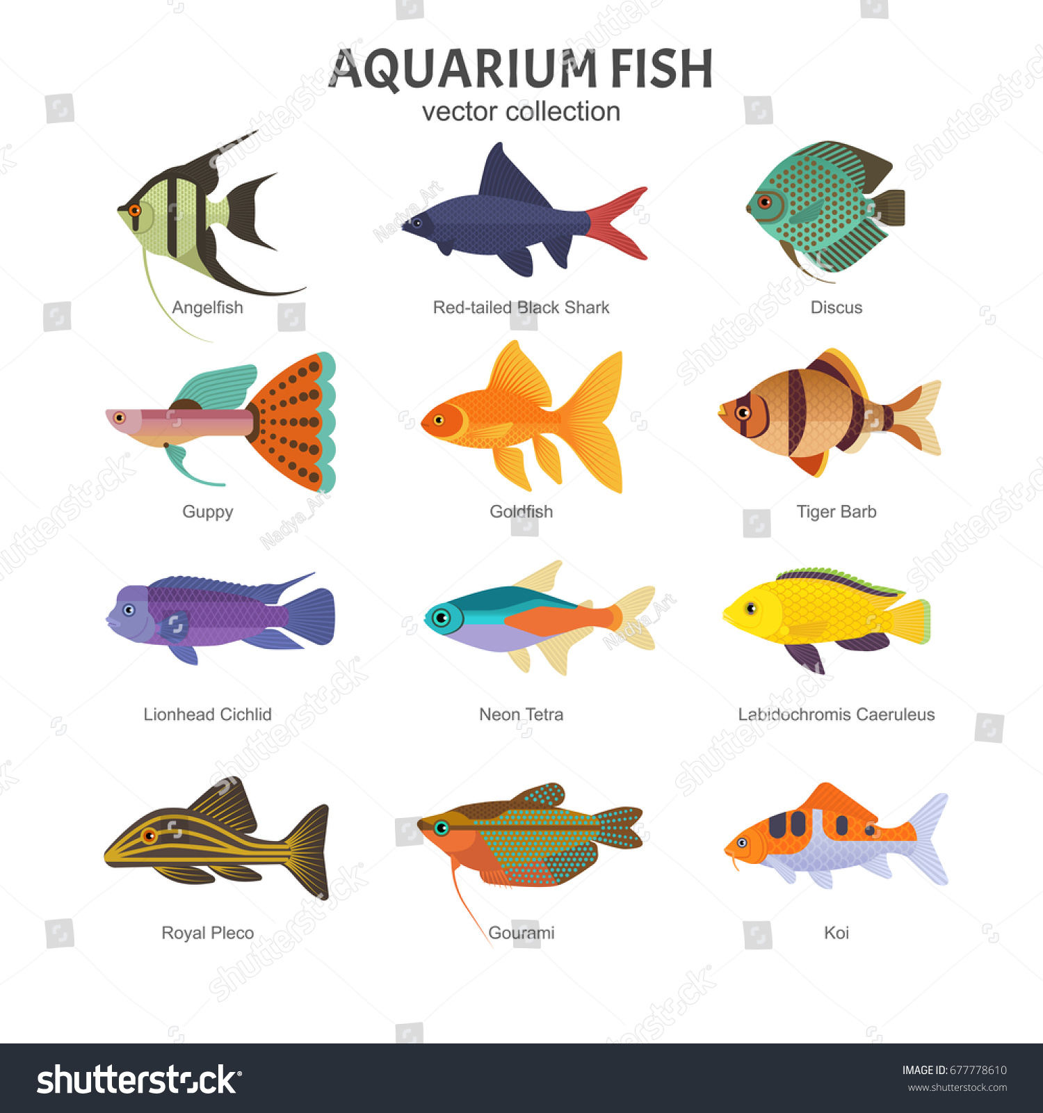 Aquarium freshwater fish set vector illustration stock Types of fish aquarium
