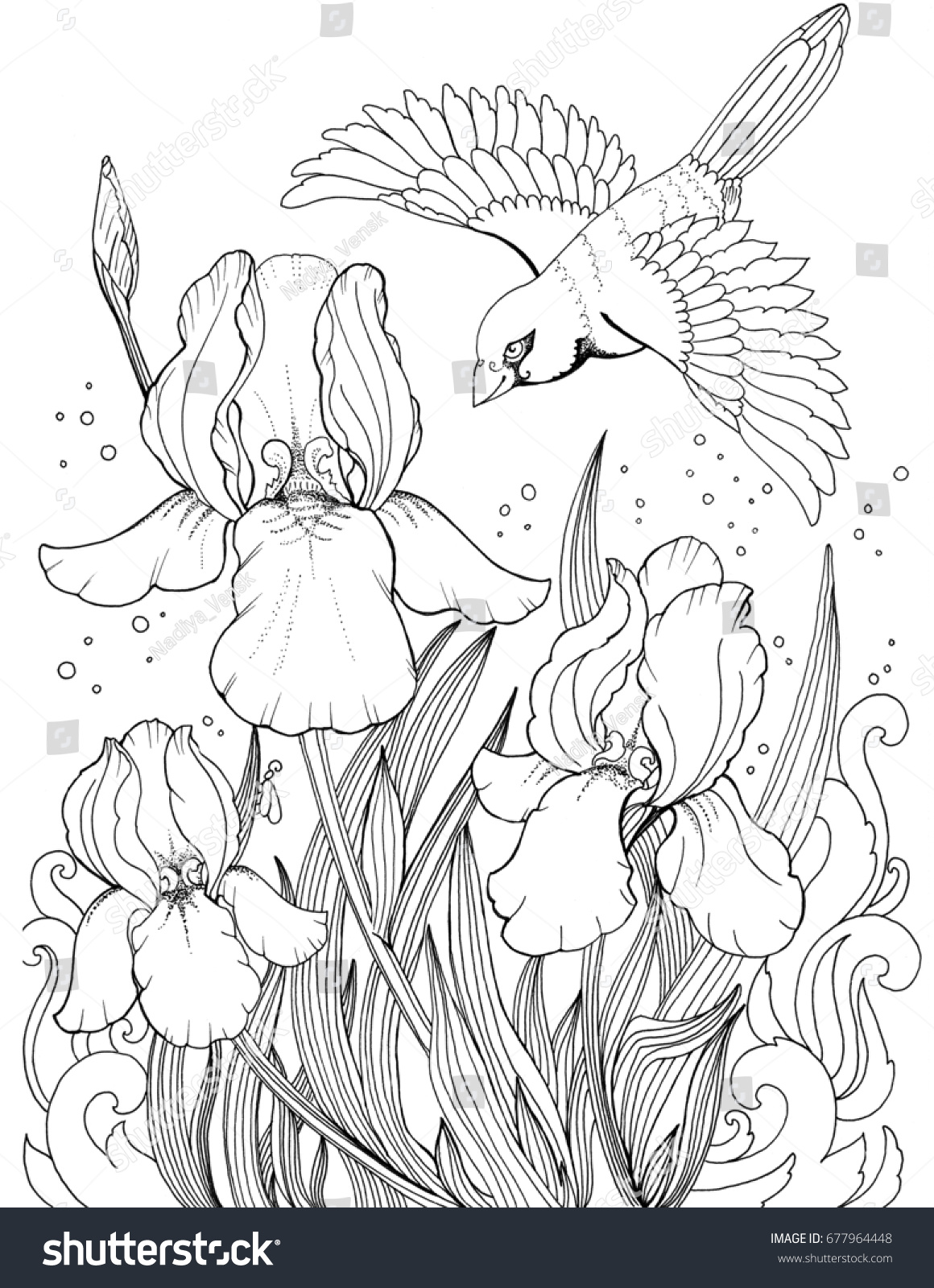 Flying bird over iris flower drawing stock illustration 677964448 flying bird over iris flower drawing of flowers and birds tattoo sketch of izmirmasajfo