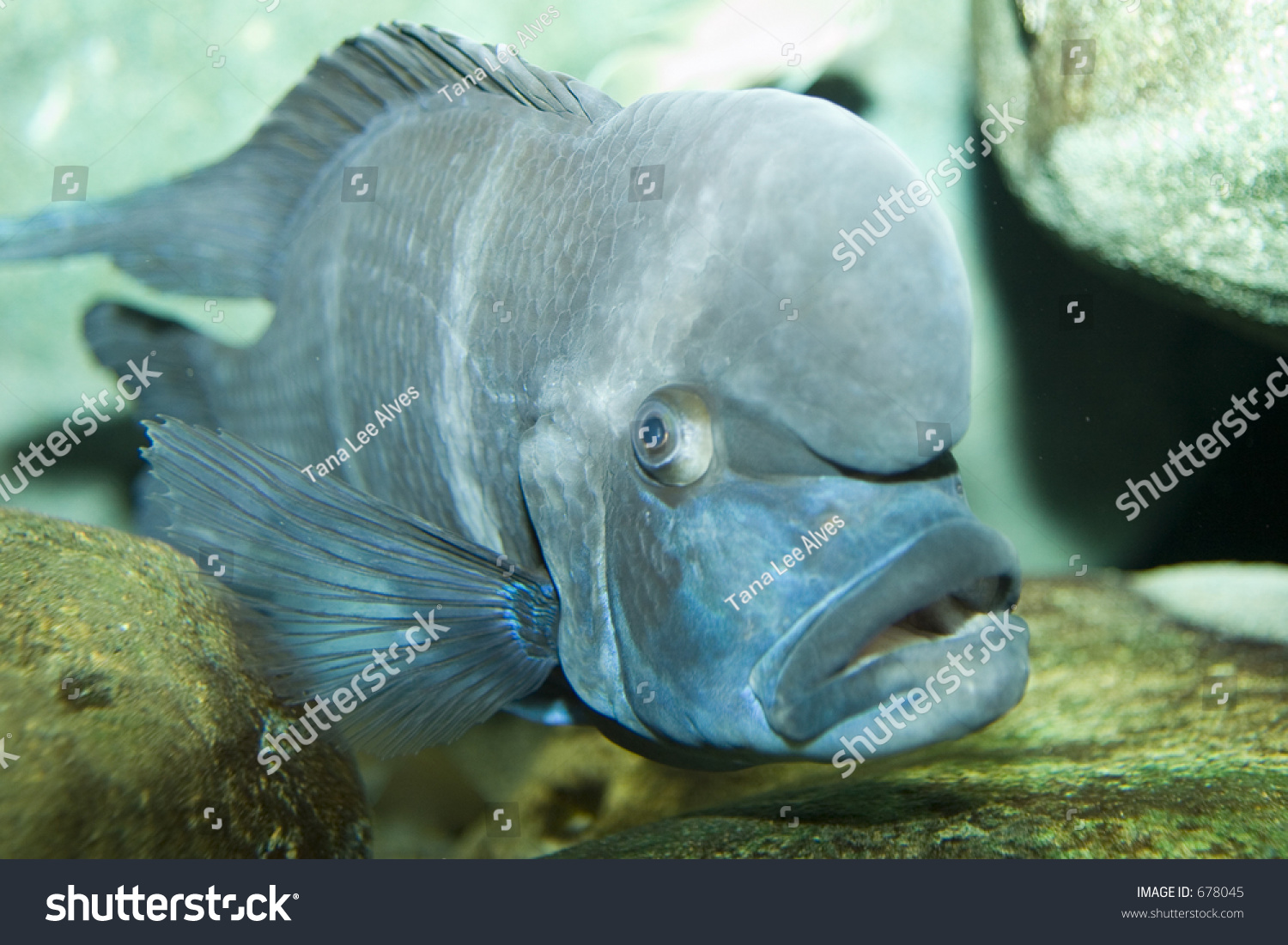 Ugly Fish Stock Photo Edit Now 678045 Shutterstock