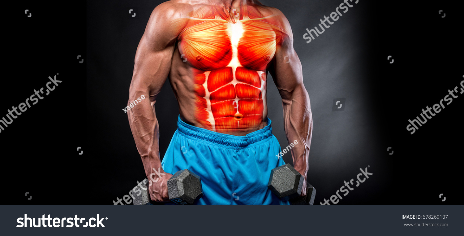 3 D Rendering Muscles Muscular Guy Working Stock Illustration ...