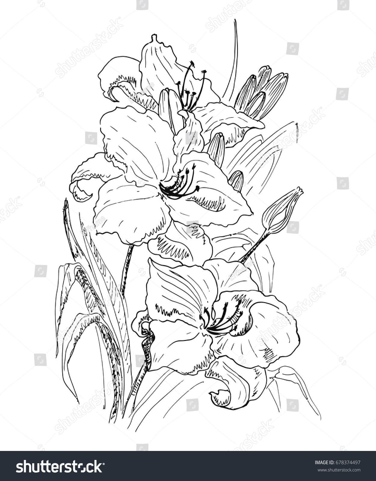Flower garden sketch - Garden Lilies Flowers Leaves And Buds The Sketch Marker Vector