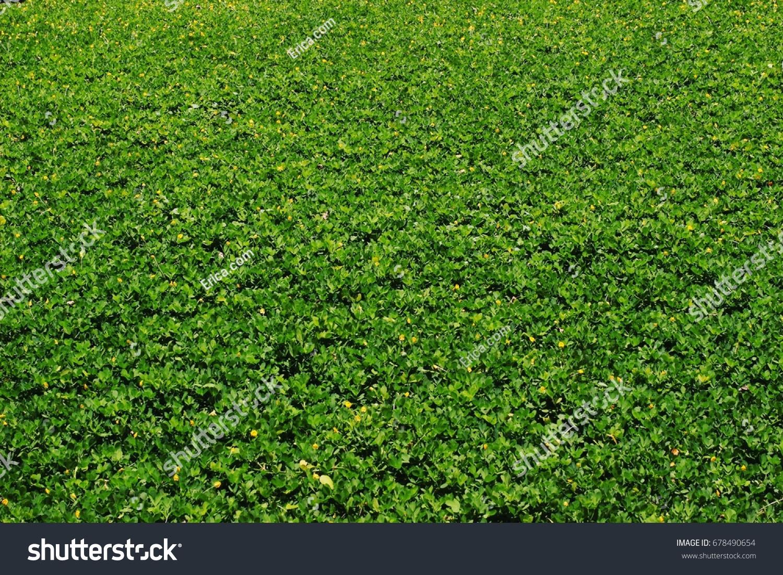 Green Field Landscape Meadow Grass Little Stock Photo Royalty Free