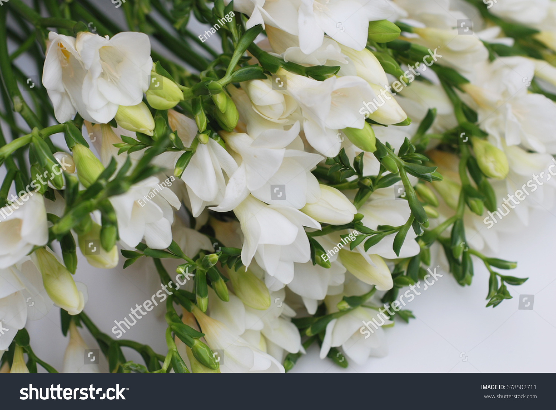 White Freesia Flower Bouquet Stock Photo Edit Now Shutterstock