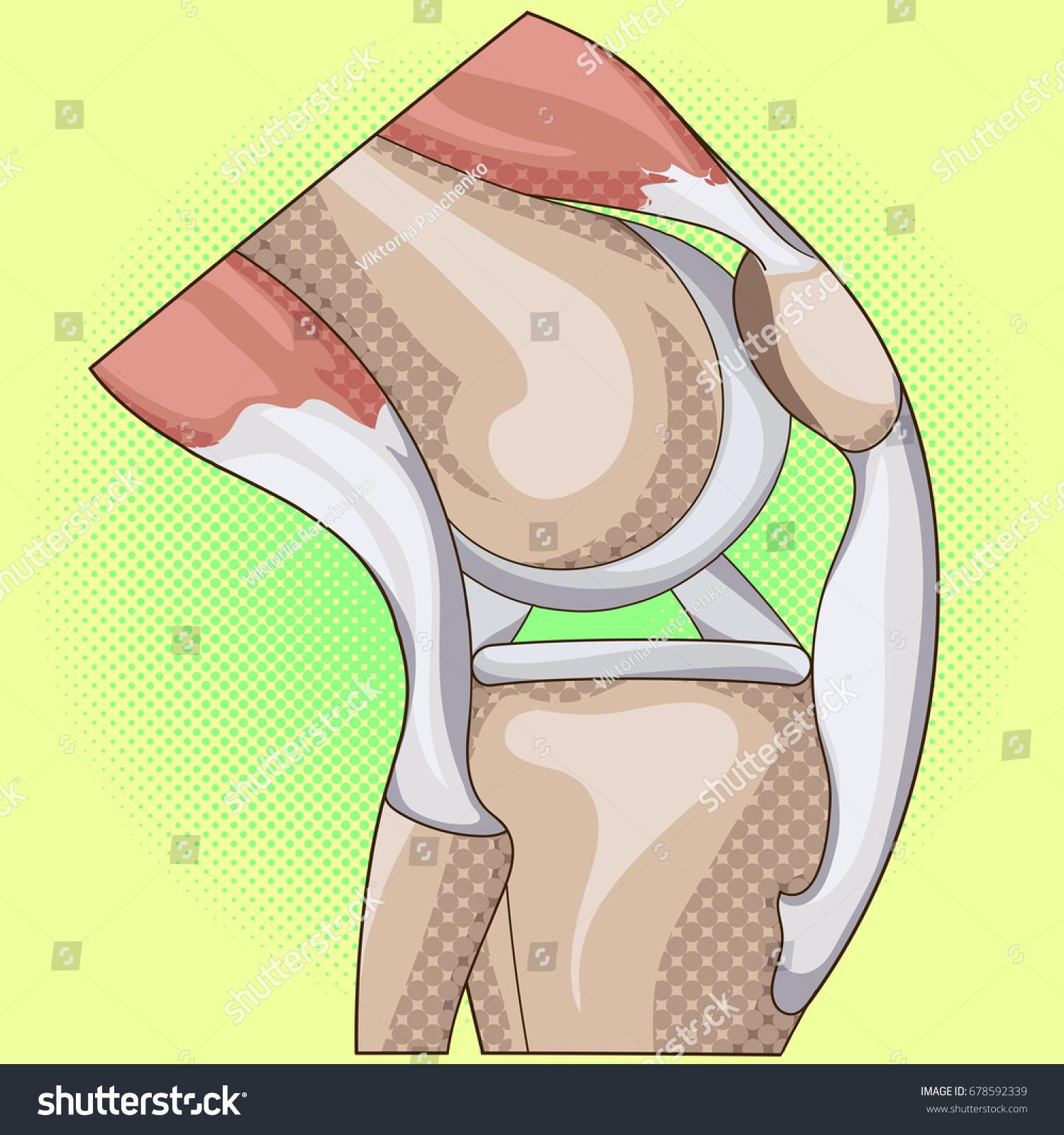 Anatomy Pop Art Design Knee Joint Stock Illustration 678592339 ...
