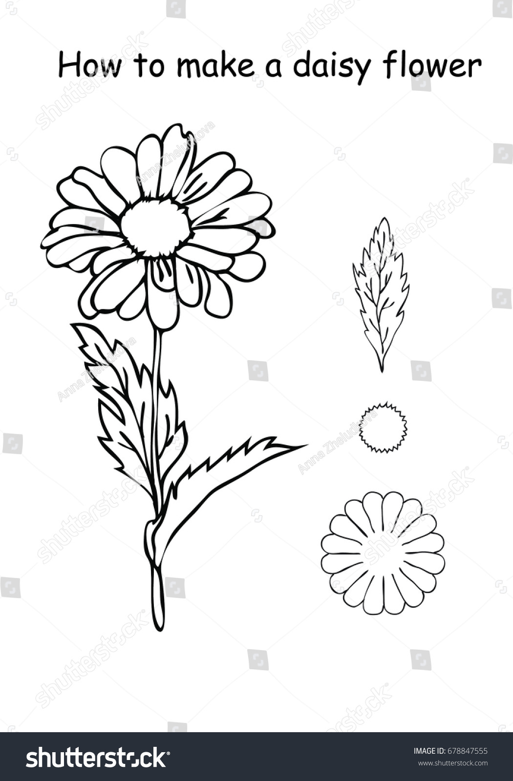How Make Daisy Flower Outline Scheme Stock Vector Royalty Free