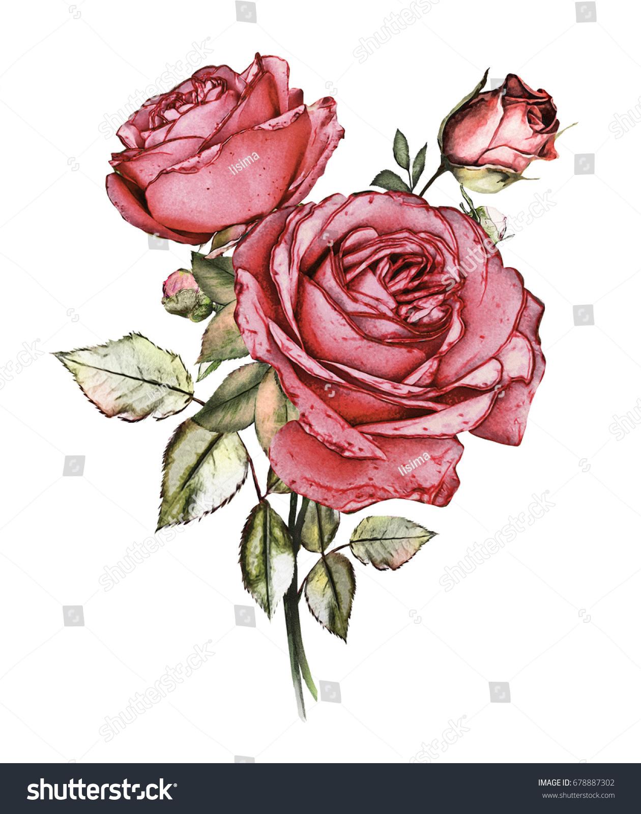Watercolor Flowers Floral Illustration Pastel Colors Stock ...