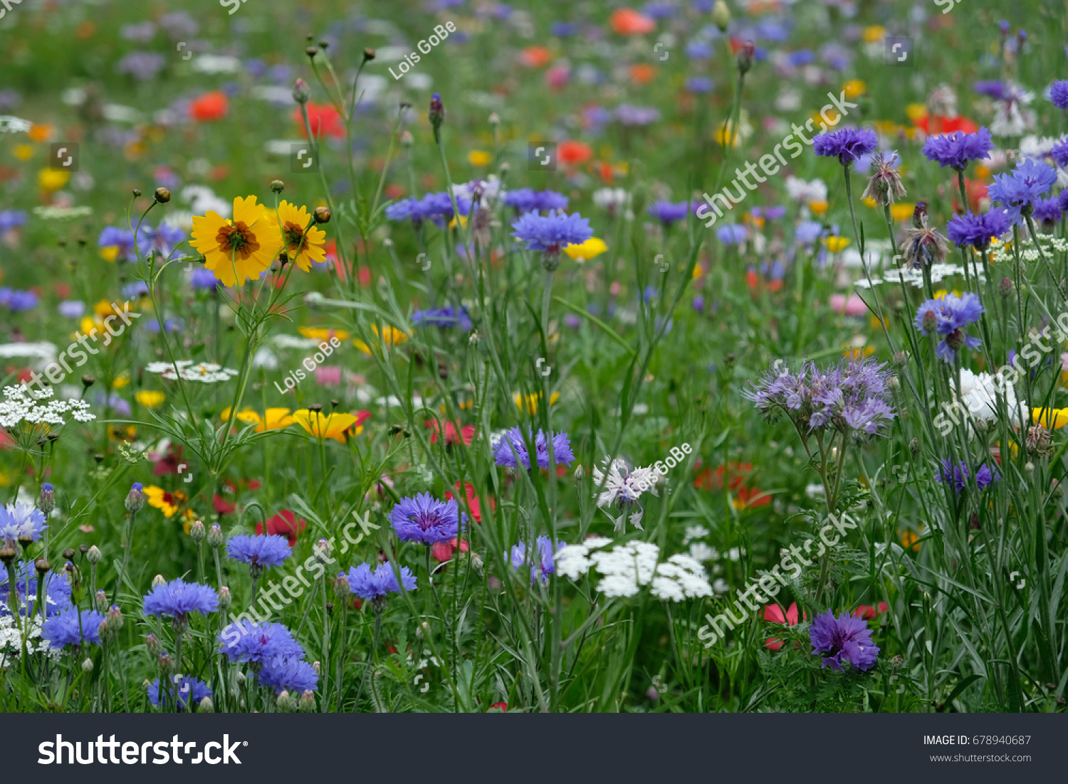 Meadow Of Wild Flowers England Uk Ez Canvas