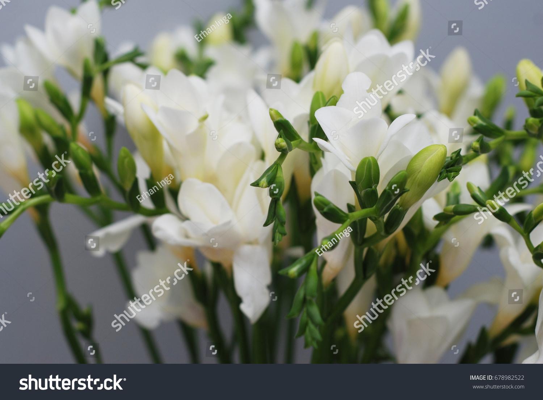 Freesia white flower bouquet ez canvas id 678982522 izmirmasajfo