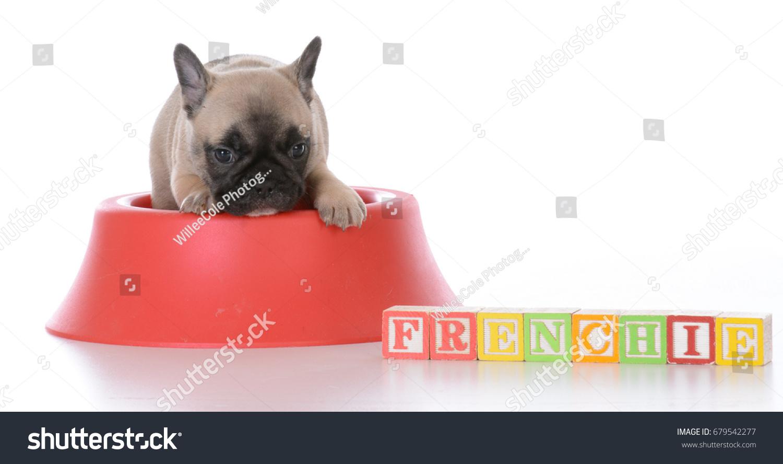 Cute French Bulldog Puppy Food Bowl Stock Photo Edit Now 679542277