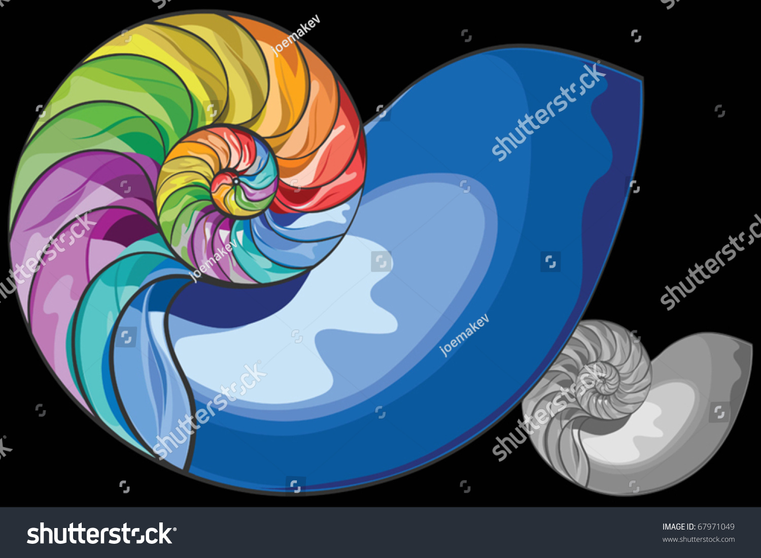 Colorful Nautilus Shell Vector Colorful Vector Stock Vector Royalty