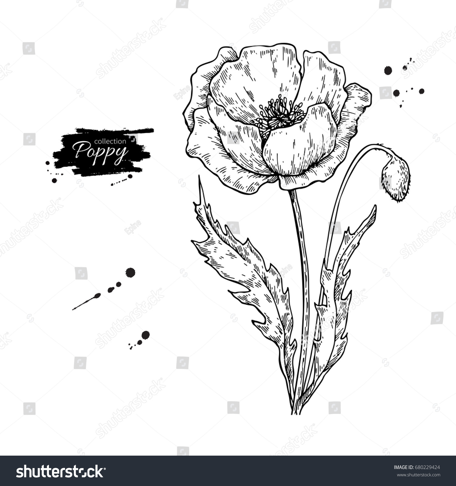 Poppy Flower Vector Drawing Set Isolated Stock Vector Royalty Free
