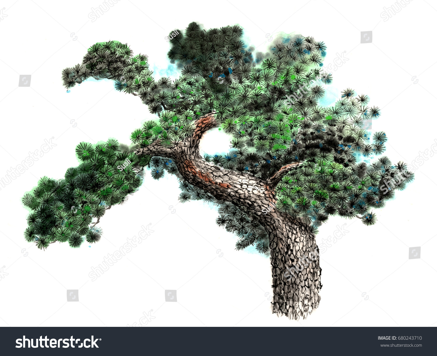 Pine Tree Symbolism Image Collections Meaning Of This Symbol