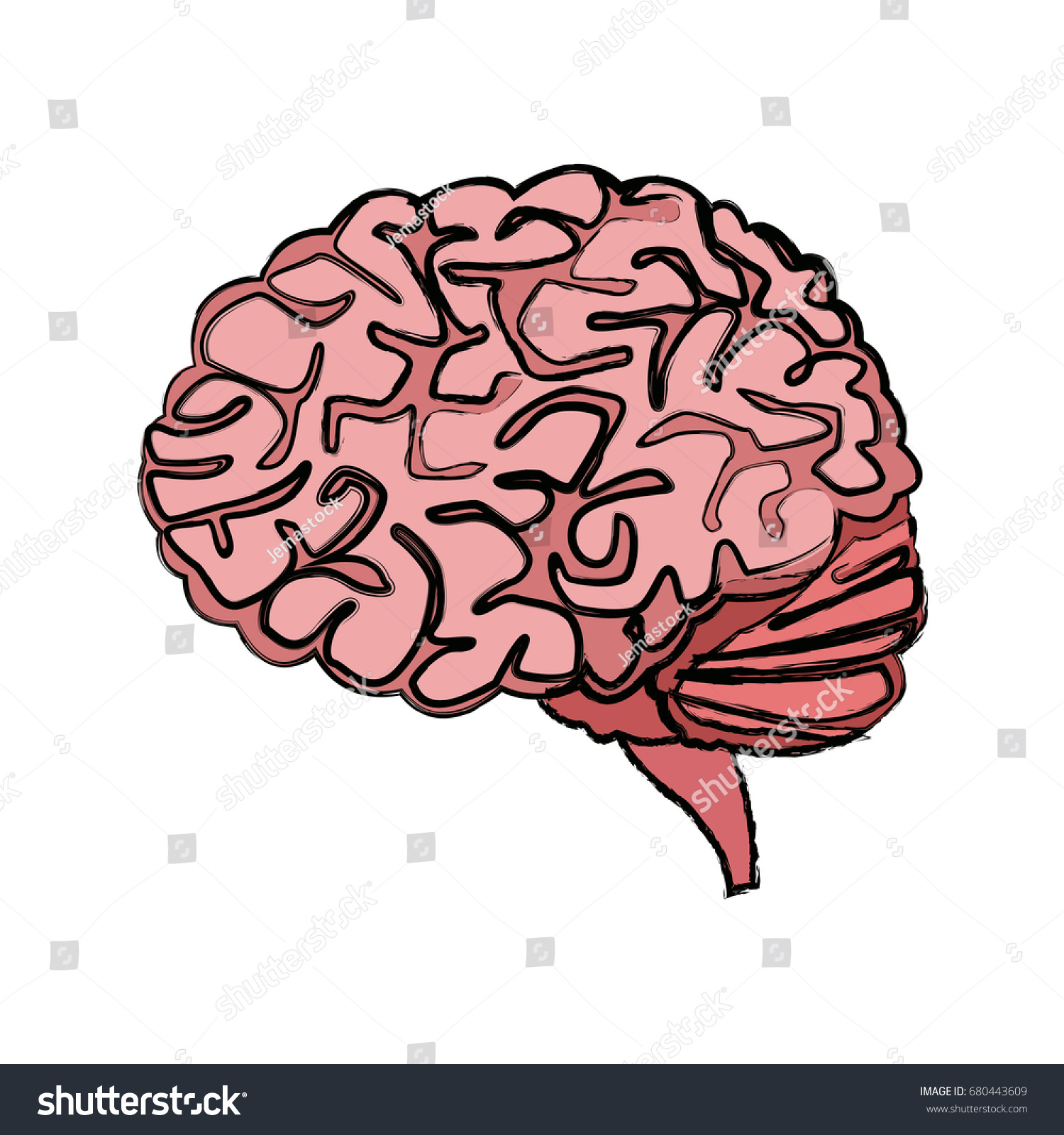 Human Brain Medical Healthy Memory Anatomy Stock Vector 680443609 ...