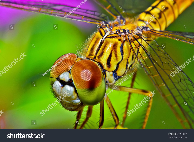 macro shots beautiful nature scene dragonfly stock photo 680510101