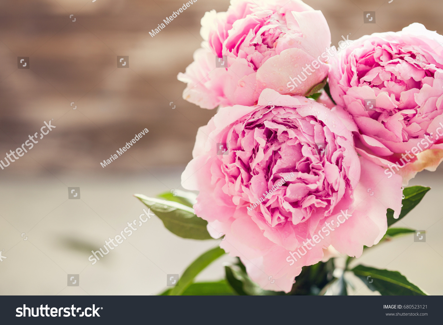 Fresh Bunch Of Pink And White Peonies Peony Roses Flowers Pastel