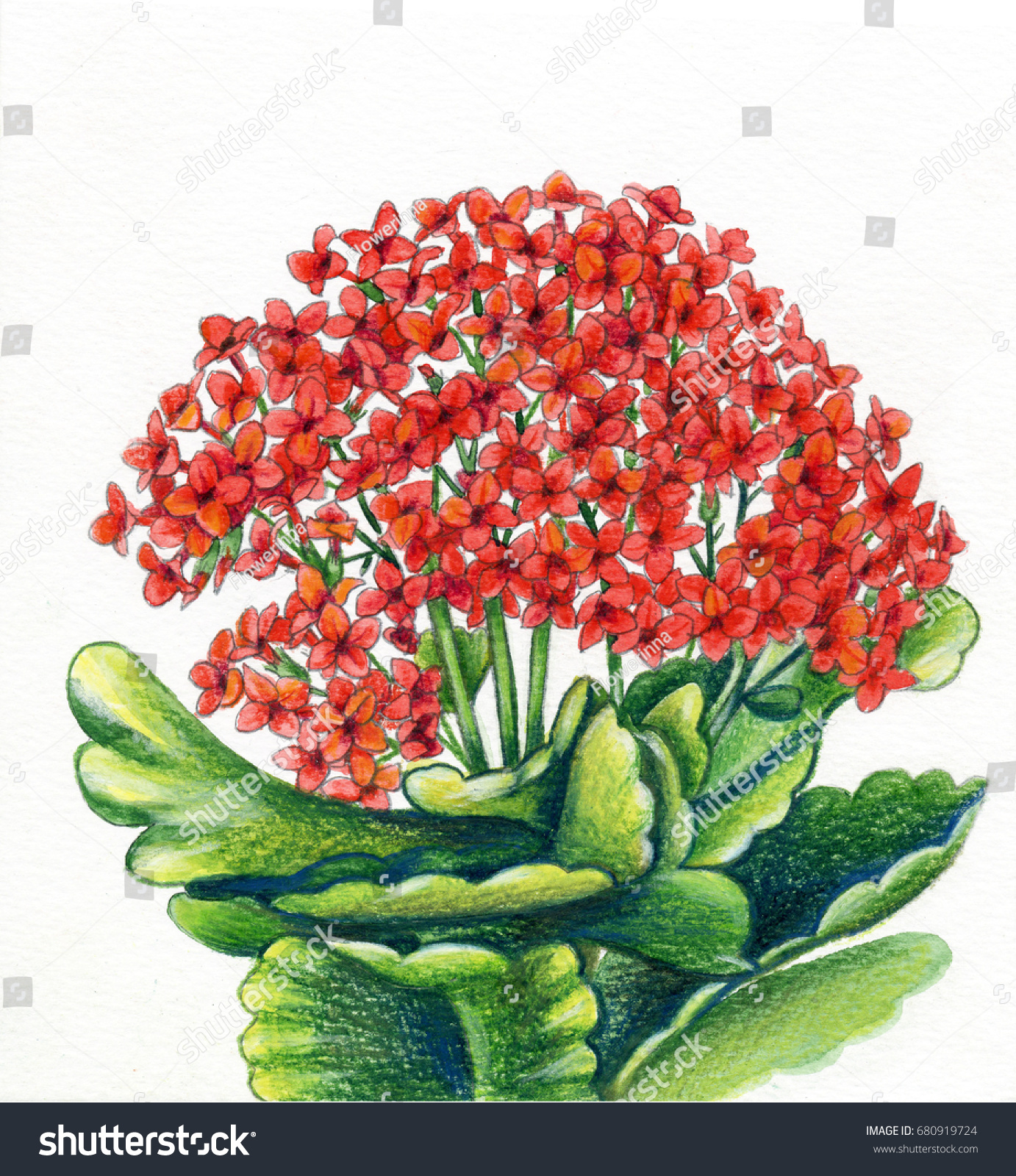 Colored Pencils Red Flowerpot Flowers Saturated Stock Illustration ...
