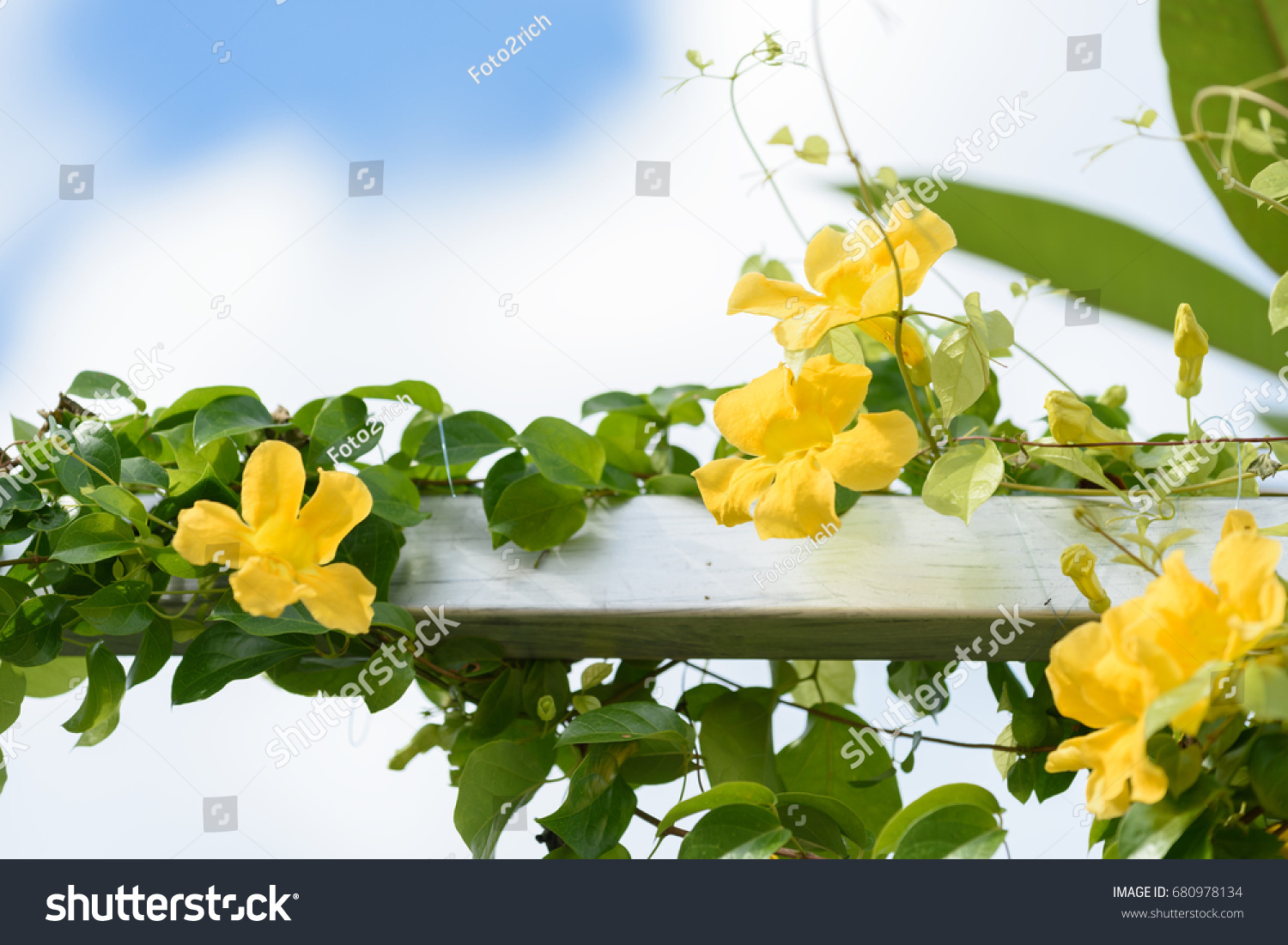 Metal Fence Beautiful Yellow Flowers Against Stock Photo Royalty