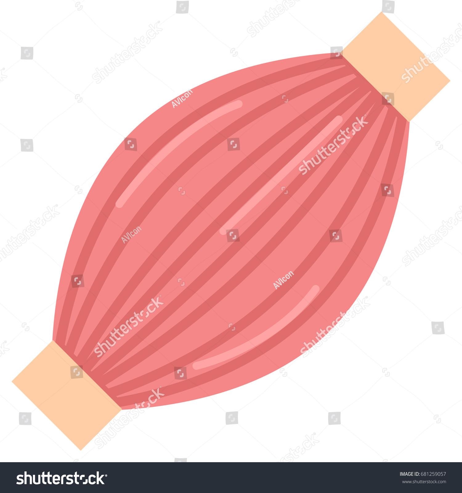 Human Muscle Icon Vector Illustration Flat Stock Vector