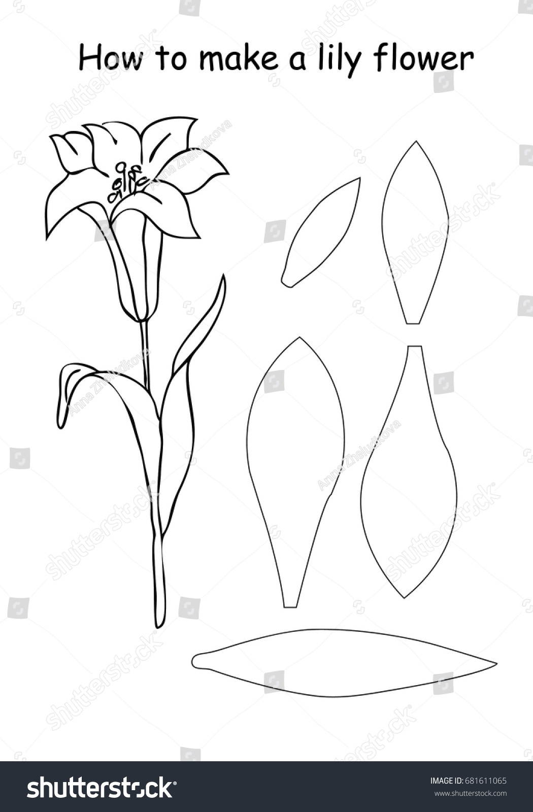How Make Lily Flower Outline Scheme Stock Vector Royalty Free