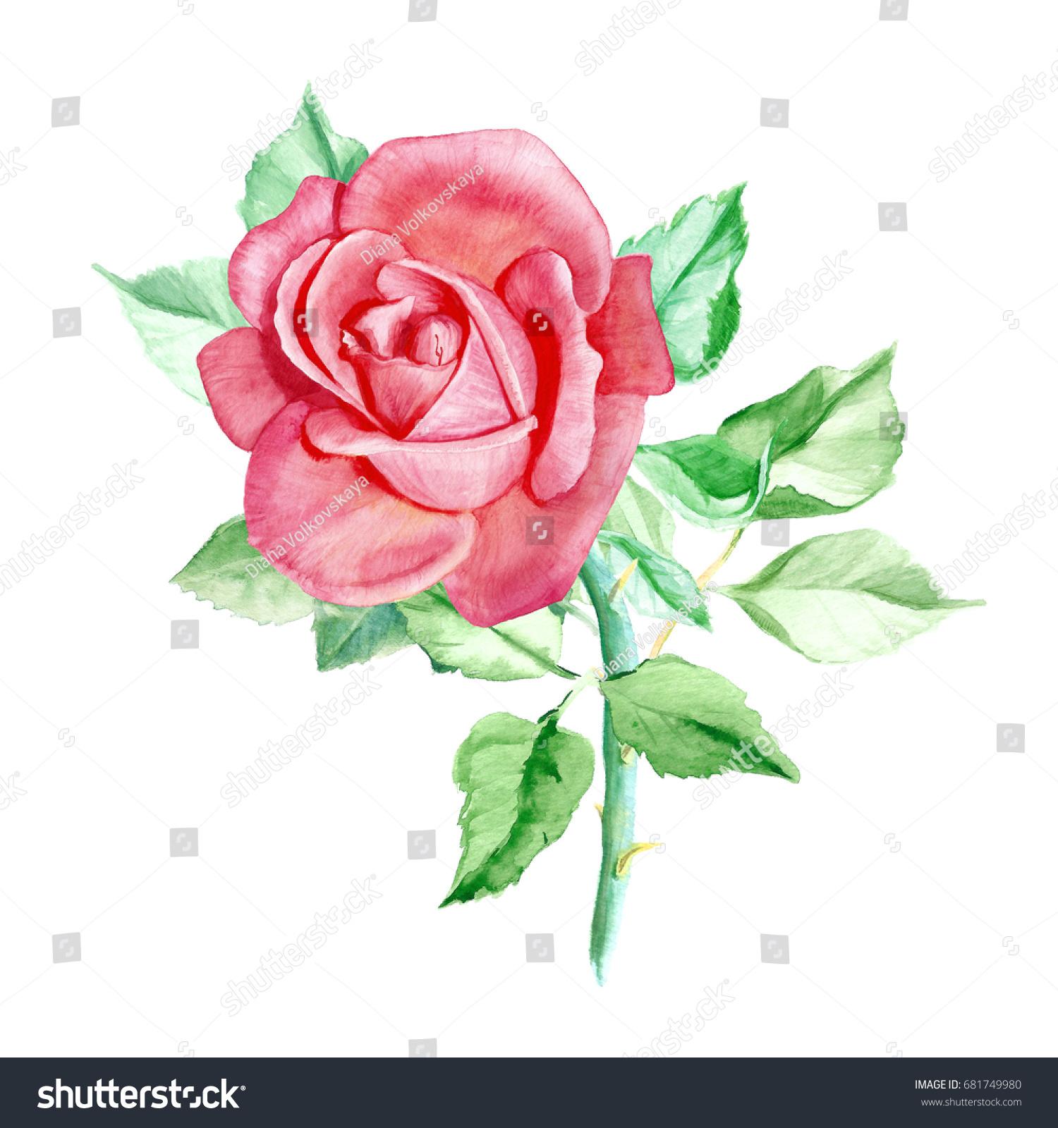 One Pink Rose Watercolor Painting Wedding Drawings Greeting Card