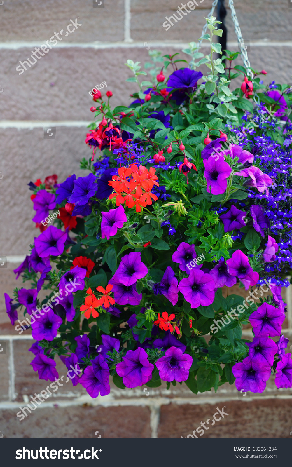Hanging Flower Planter Colorful Blue Red Stock Photo Download Now