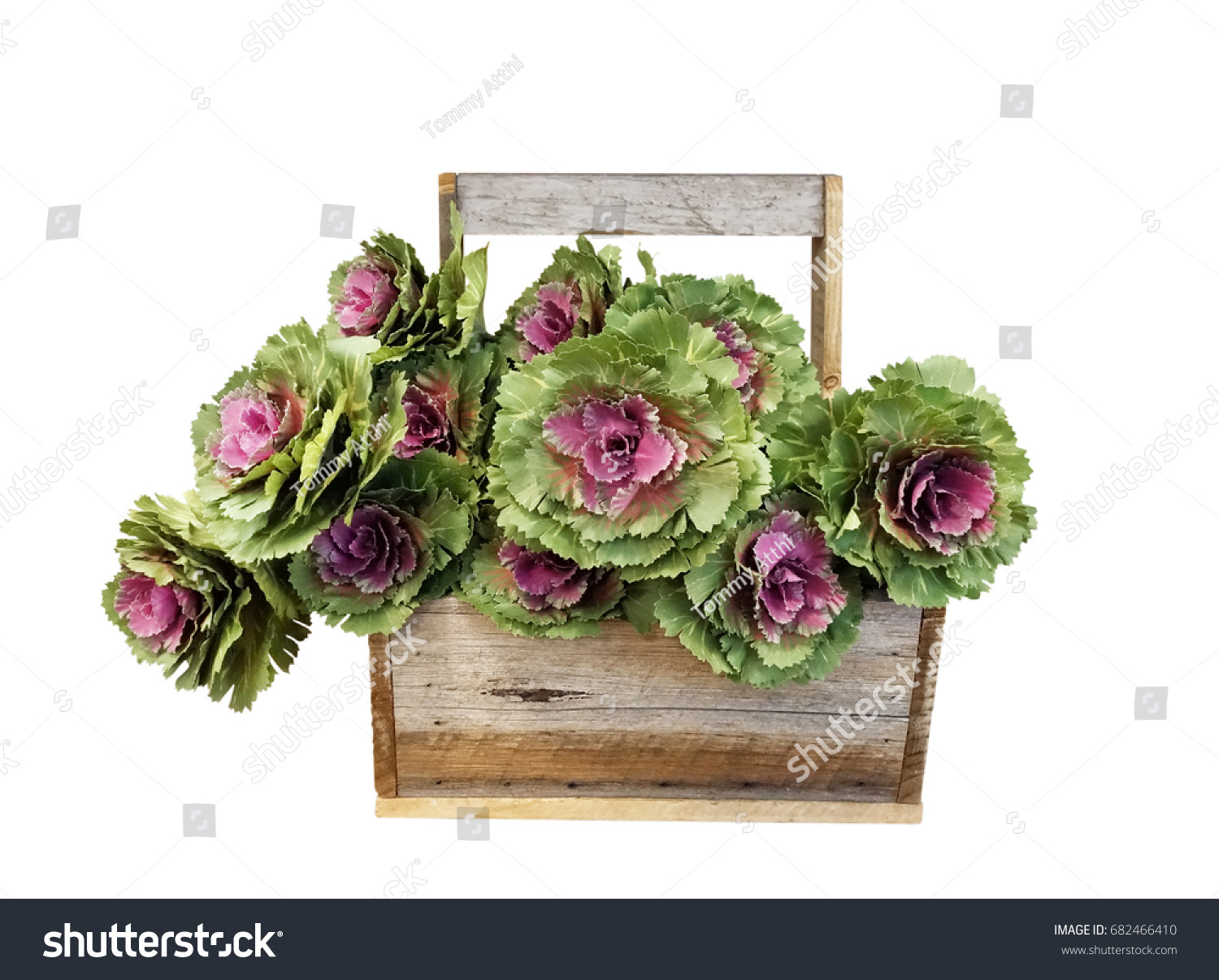 Kale Flower Cabbage Rose Flower Wooden Stock Photo Edit Now