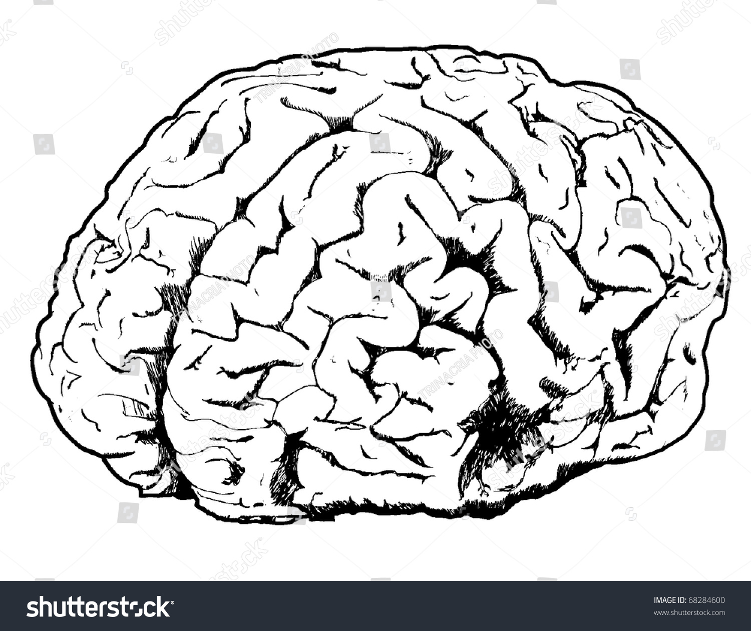 Line Drawing Brain : Line drawing brain stock vector shutterstock