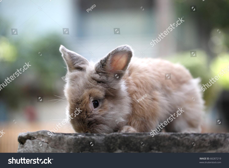 cute lovely brown teddy bear rabbit stock photo edit now 68287219