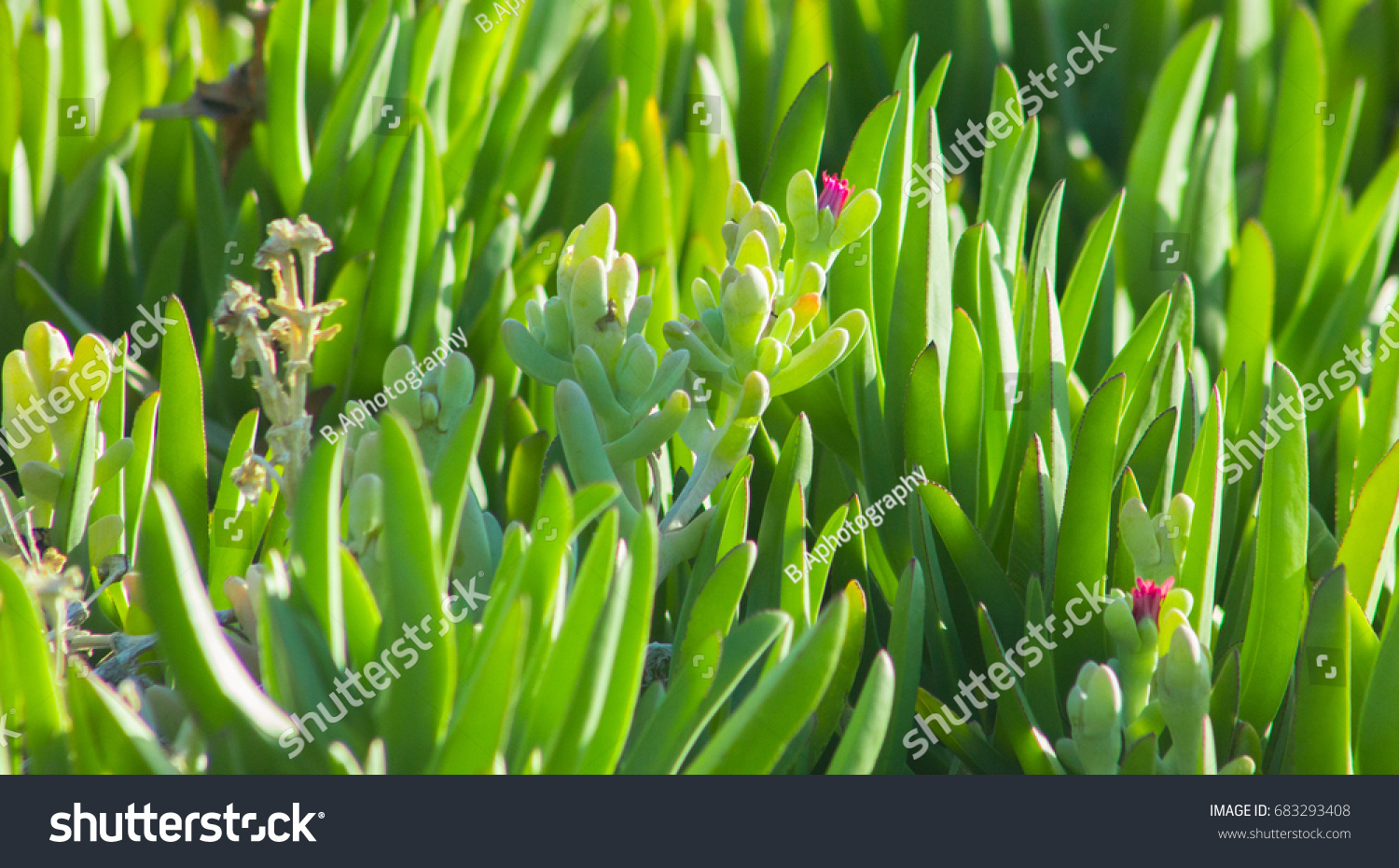 Beautiful Spring Flowers Blooming Under Sun Stock Photo Edit Now