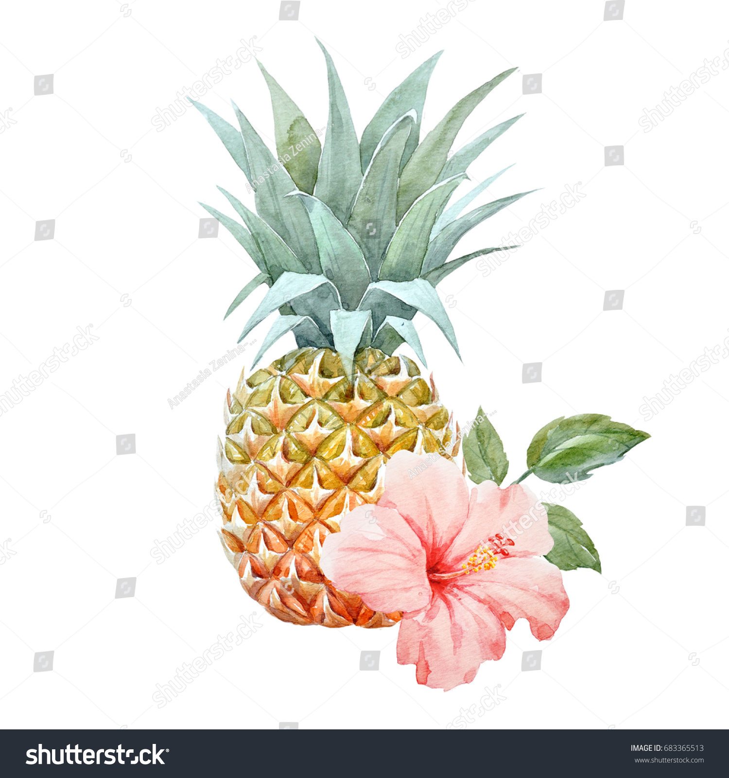 Watercolor picture pineapple pink hibiscus flower stock illustration watercolor picture of pineapple pink hibiscus flower isolated object on white background izmirmasajfo