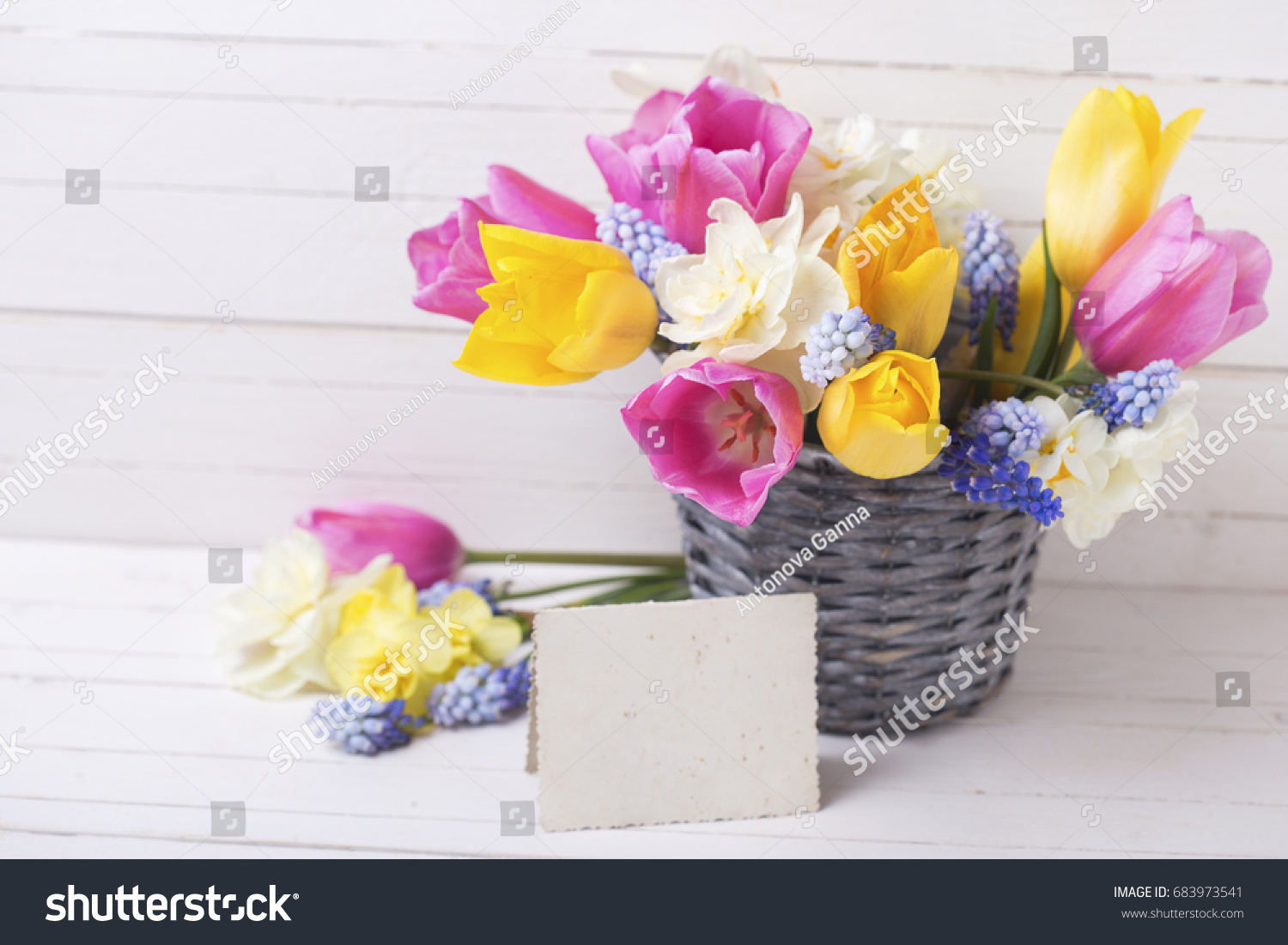 Bright Pink Yellow And White Spring Tulips And Daffodils Flowers In