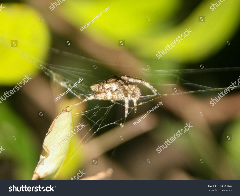 Detailed Closeup Photograph Orb Weaving Garden Spider Stock Photo ...