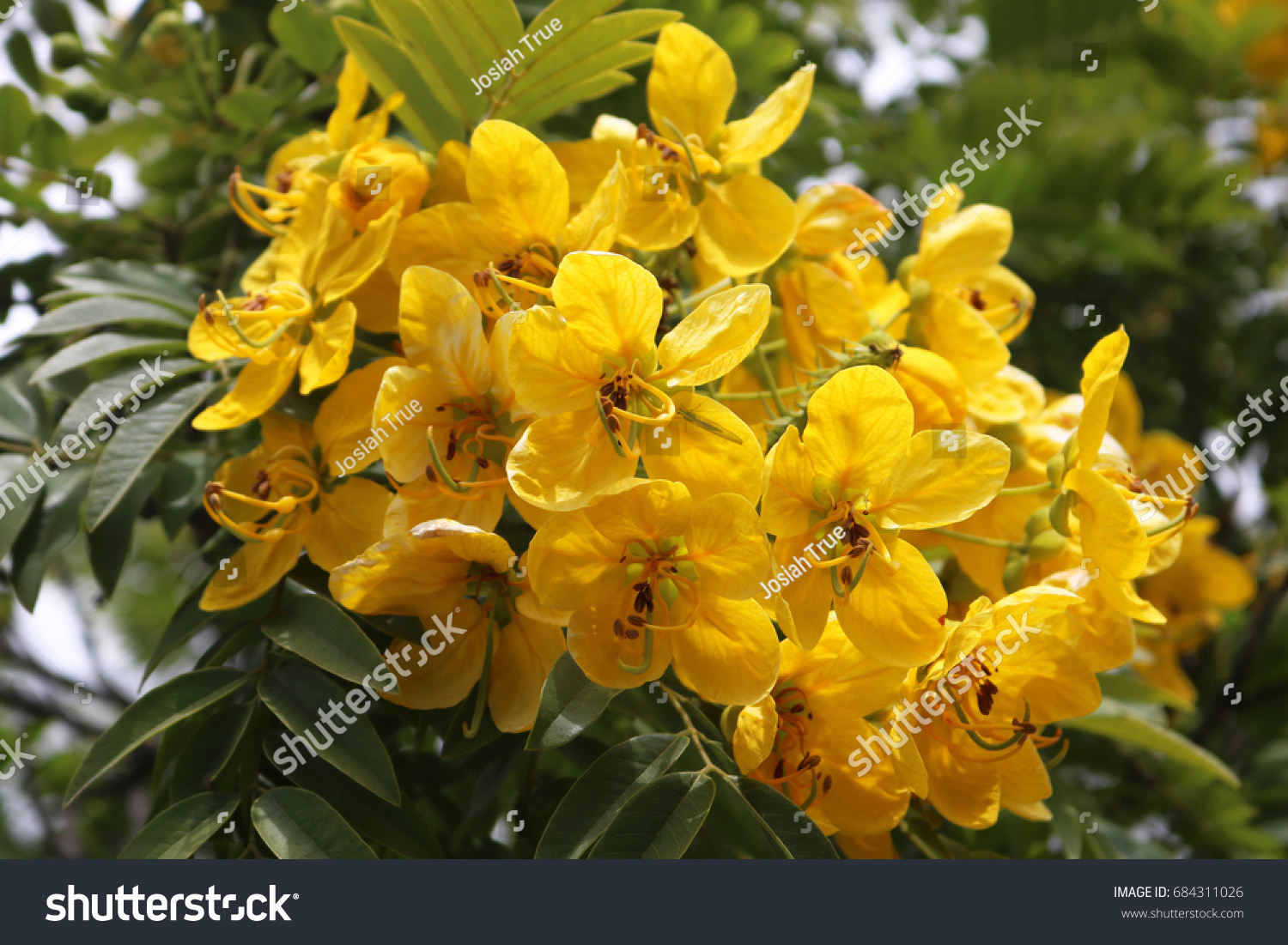 Yellow Flowers Southern California Stock Photo Edit Now 684311026