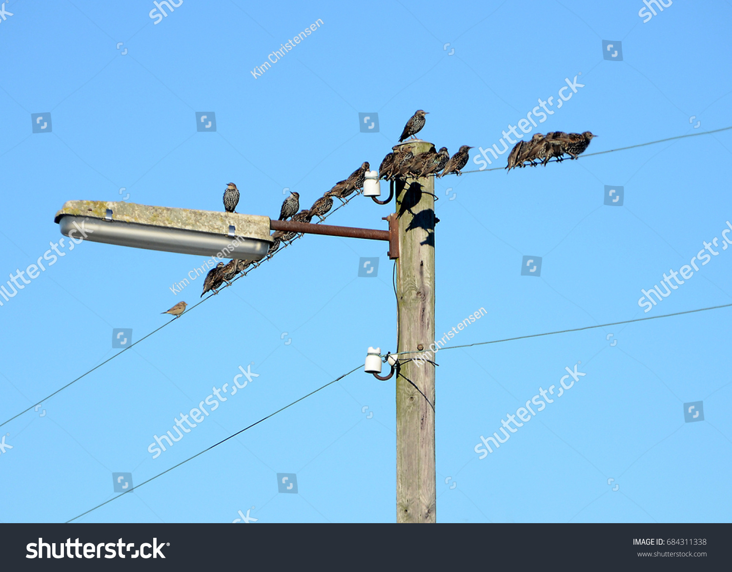 Old wooden lamp post wires occupied stock photo royalty free old wooden lamp post with wires occupied by starlings ready for winter migration aloadofball Images