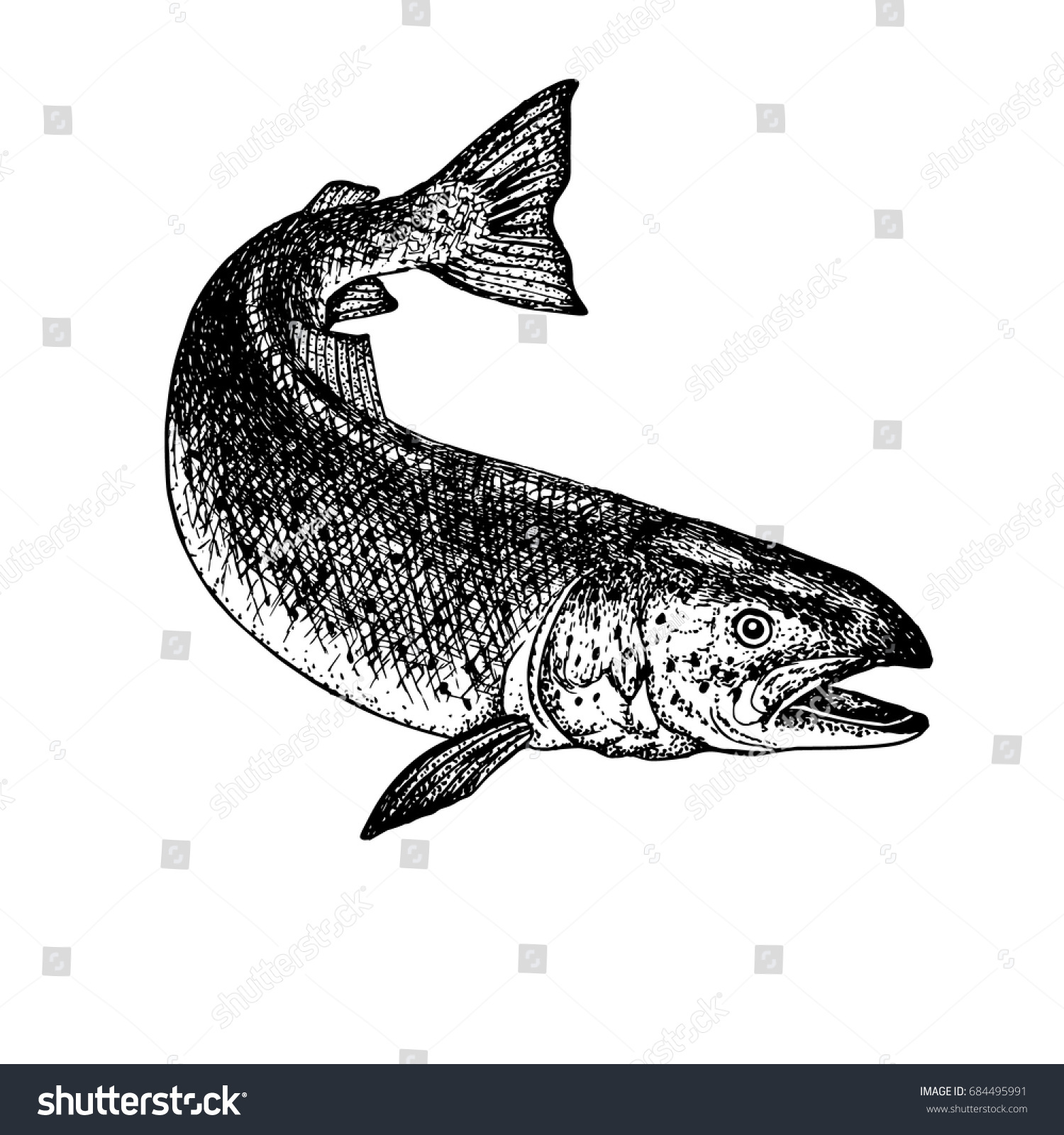 Stock vector ethnic animal doodle detail pattern killer whale - Hand Drawn Salmon Retro Sketch Isolated Vintage Hypster Image Doodle Line Graphic Design