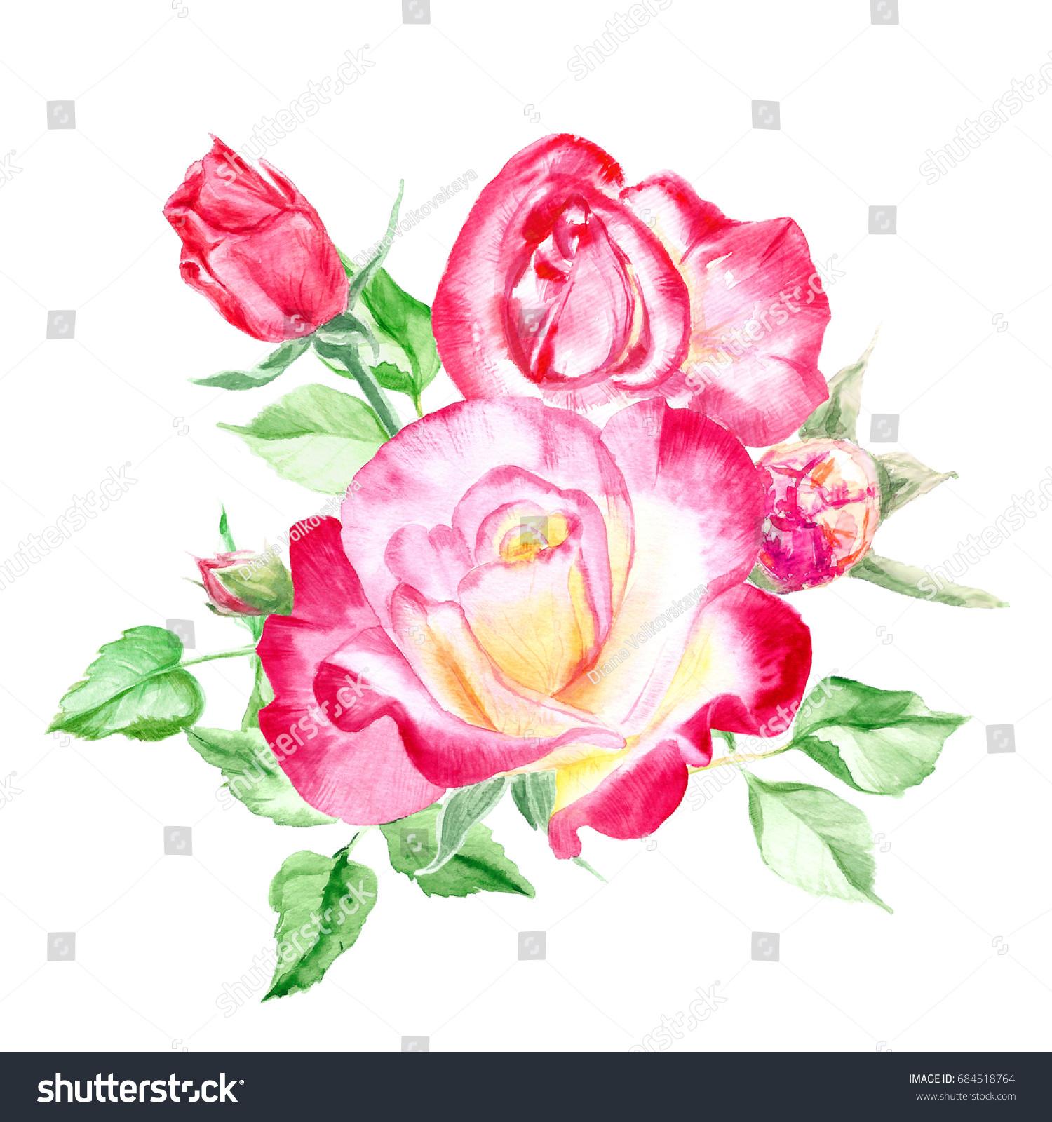 Bouquet Pink Roses Rose Bush Pink Stock Illustration Royalty Free