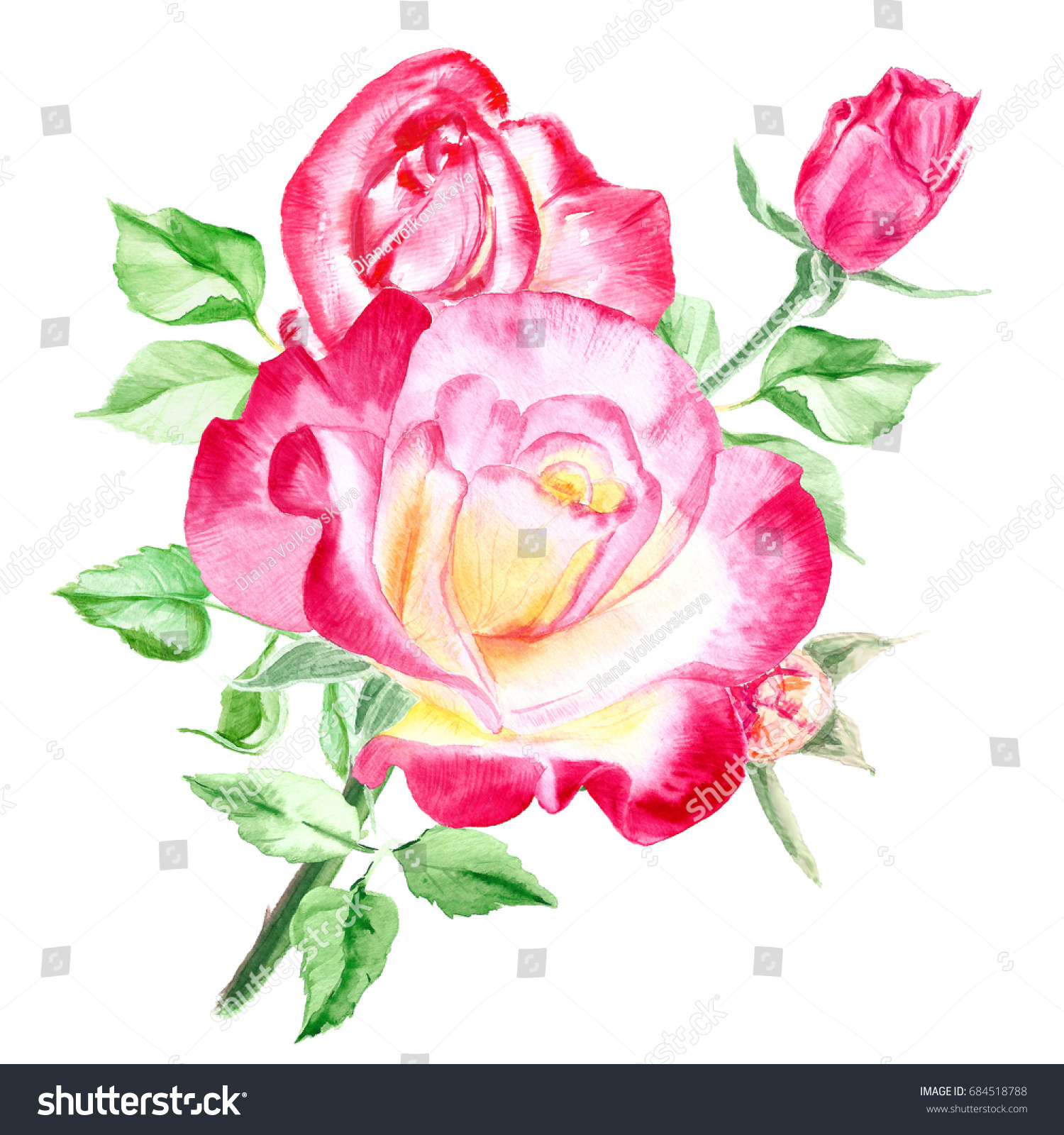Bouquet Pink Roses Rose Bush Pink Stock Illustration 684518788