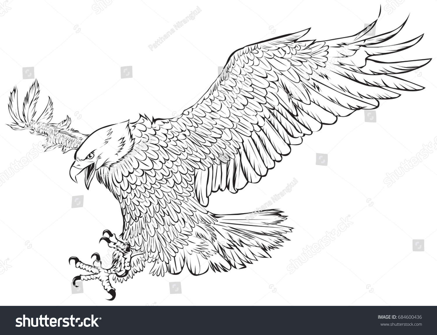 bald eagle swoop hand draw monochrome stock vector 684600436