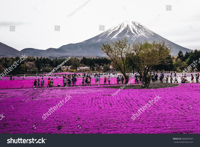 Tourist Enjoy Visiting Shiba Sakura Festival Stock Photo Edit Now
