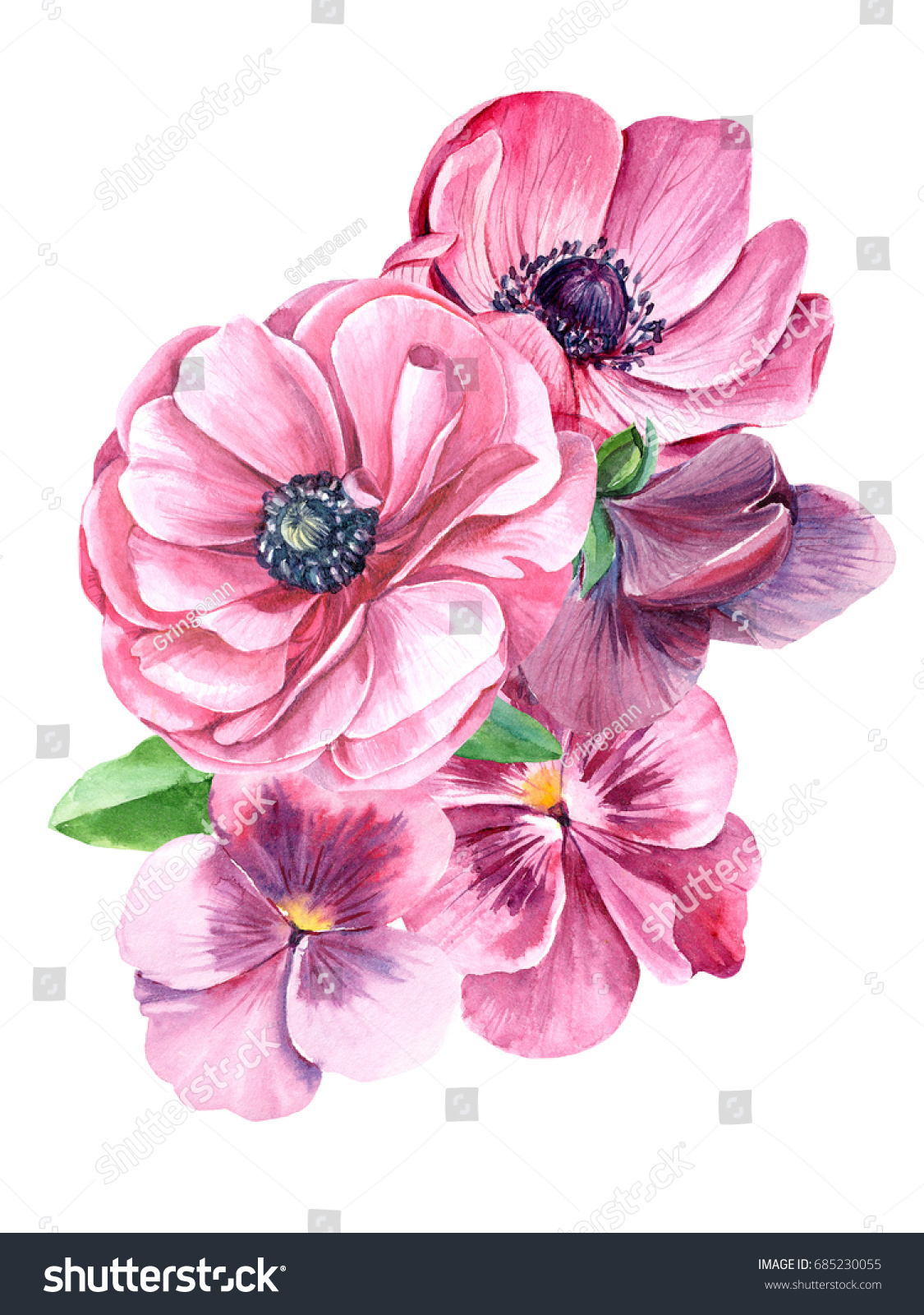 Pink Pansy Anemones Flowers Isolated On Stock Illustration Royalty