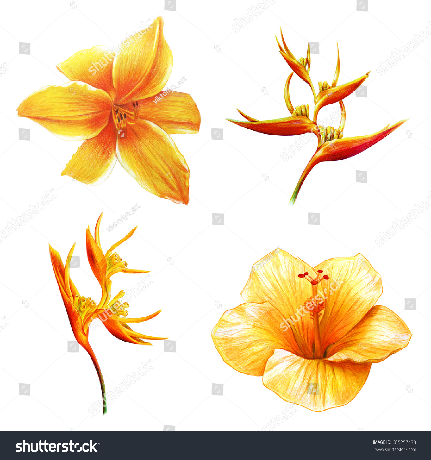 Yellow Exotic Flowers Drawing Stock Illustration 685257478