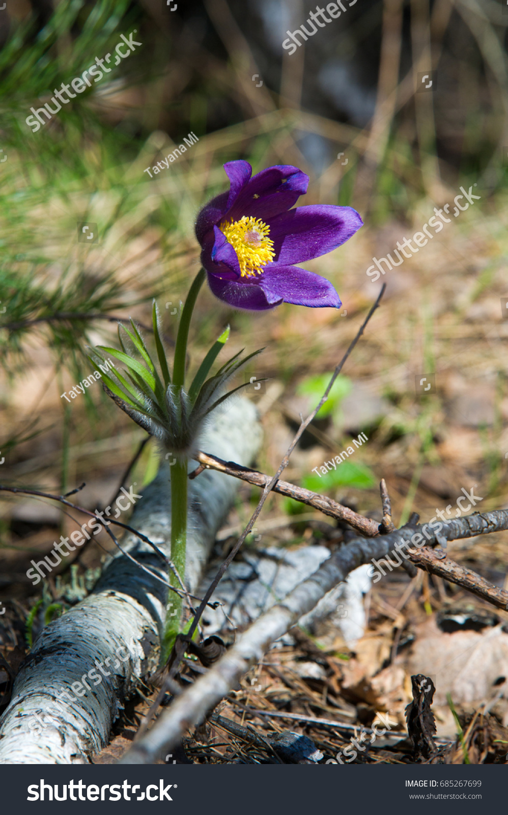 Spring Landscape Flowers Growing Wild Spring Stock Photo Royalty