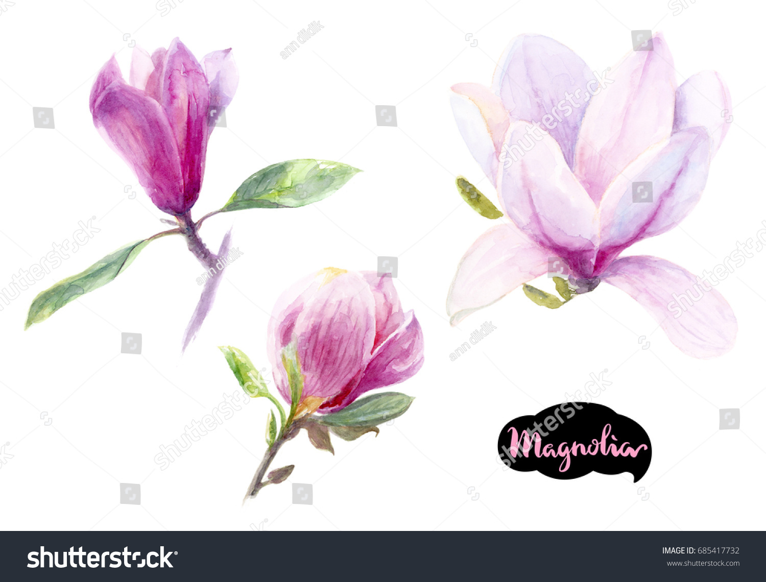 Magnolia flowers watercolor hand draw illustration stock magnolia flowers watercolor hand draw illustration romantic flower template for design cards notebook maxwellsz