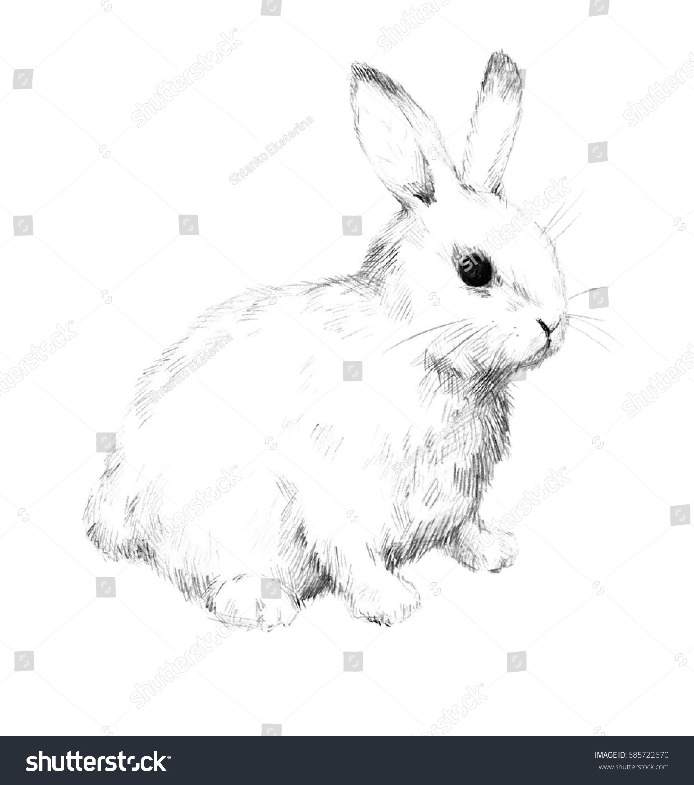 Sketch of a rabbit small furry pet pencil sketch 2