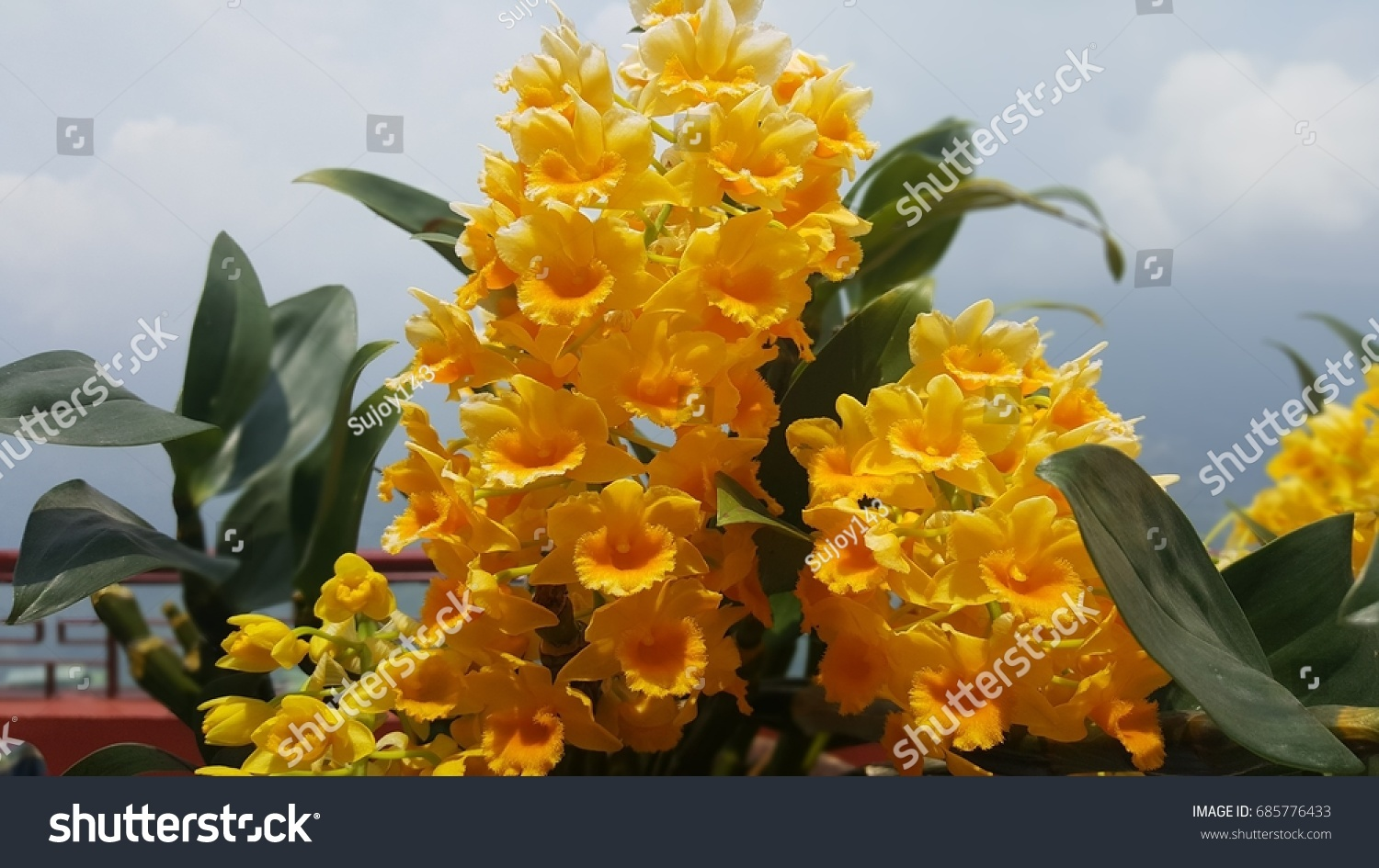 Wild Flowers India Stock Photo Edit Now 685776433 Shutterstock