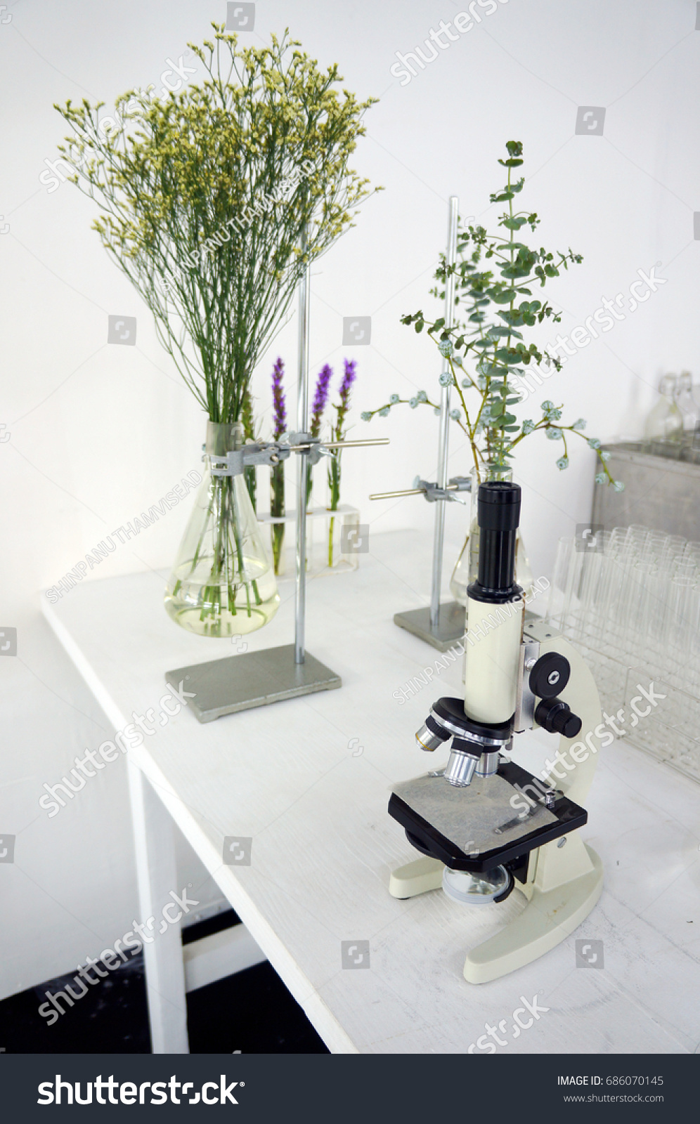 Experiment Plant Tissue Culture Laboratory Stock Photo Royalty Free