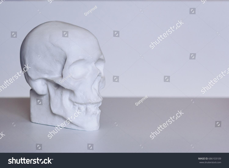 Human Gypsum Skull Study Anatomy Artists Stock Photo (Edit Now ...