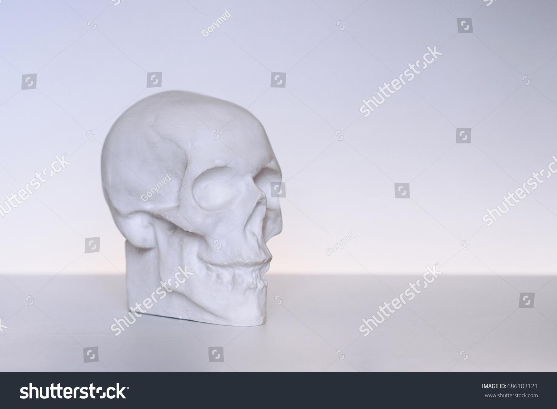 Human Gypsum Skull Study Anatomy Artists Stock Photo (Safe to Use ...